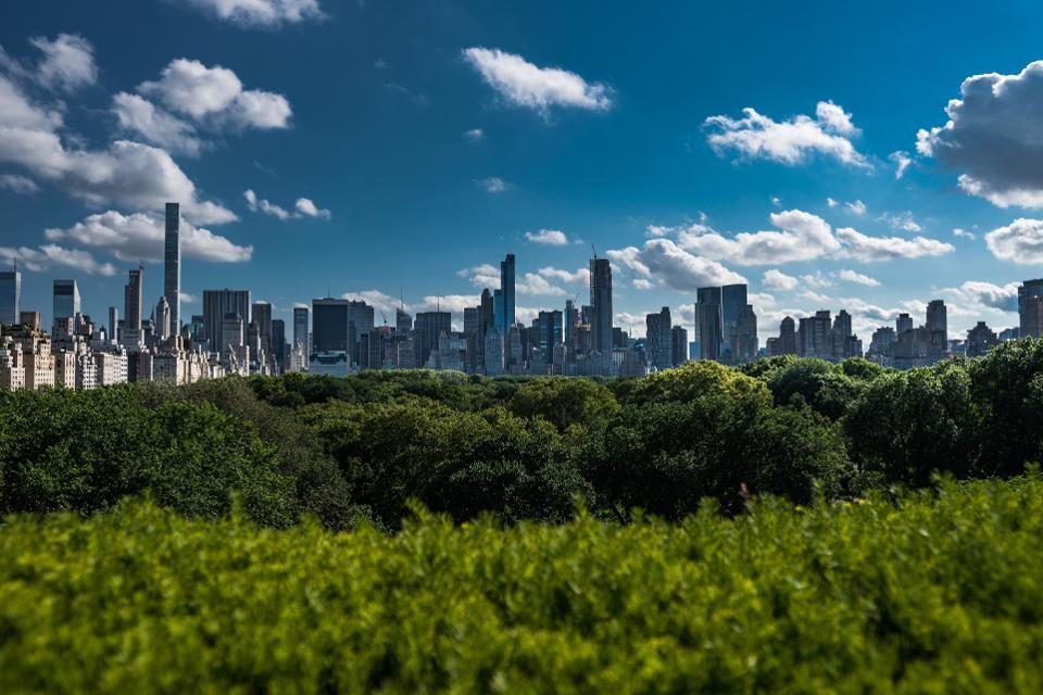 城市树木每年为美国节省多达120亿美元
