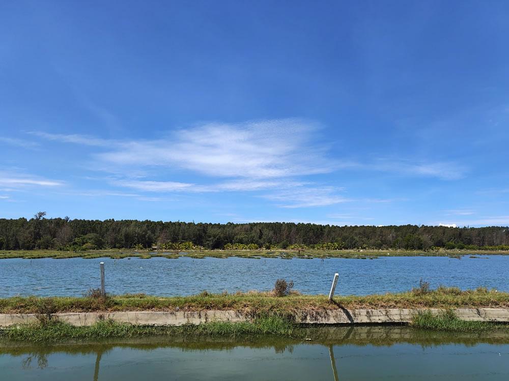 自然生态湿地