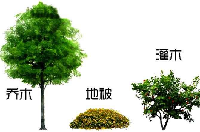 乔木灌木草本的区别