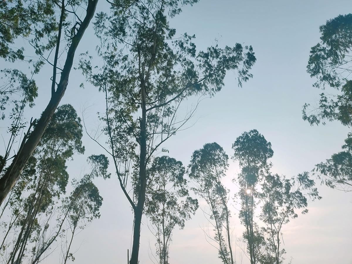 晚霞树影 二